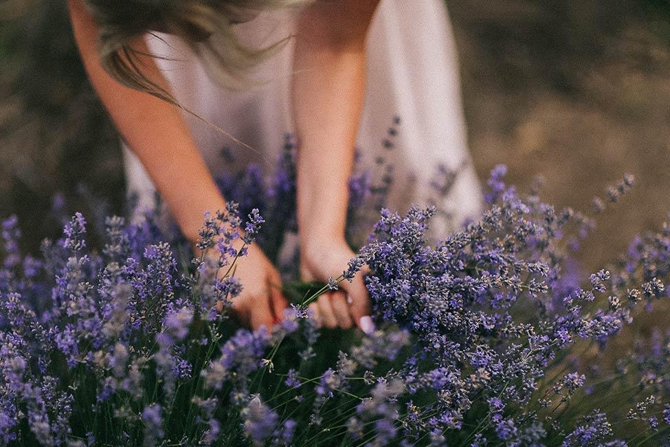 A girl picks lavender in Bessarabia.