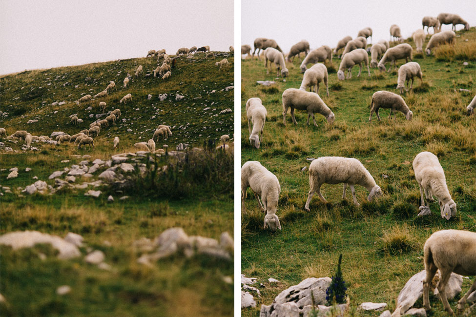 Sheep join the scenery in these beautiful mountain engagement photos in Italy.
